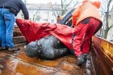 Sprawcom obalenia pomnika prałata Jankowskiego grozi nawet pięć lat więzienia.
