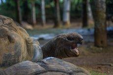Historia miłosna z austriackiego zoo poruszyła internautów na całym świecie (zdjęcie poglądowe)