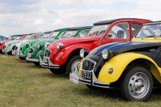 Na zlotach ogólnopolskich można spotkać setki klubowiczów, którzy chwalą się swoimi samochodami.