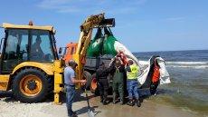 Martwego wieloryba znaleziono na brzegu w Kątach Rybackich