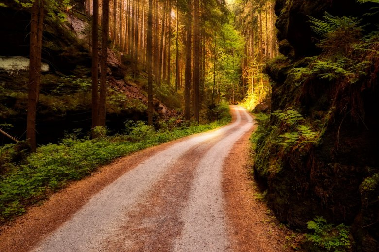 Dla wielu z nas natura stała się luksusem, a nie potrzebą. Jak dowodzi książka ''Natura leczy'' nawet jej niewielka dawka może mieć zbawienny wpływ na nasze zdrowie, a także stać się kluczowym składnikiem czegoś, co nazywamy szczęściem