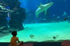 Podwodne obserwatorium rafy koralowej to jedna z atrakcji w Eilacie