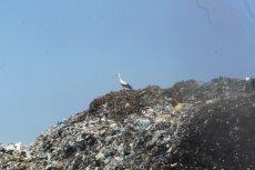 Do Polski trafiają już śmieci nawet z Australii i Nigerii.