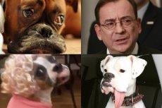 Twittera po zeznaniach Roberta Nowaczyka na temat Mariusza Kamińskiego zalały zdjęcia psów.