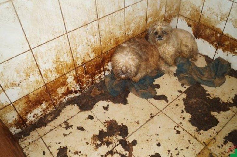 Zwierzęta były trzymane w makabrycznych warunkach.