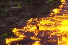 Pożary w Amazonii i na Syberii to nie jest lokalny problem. Lasy w Ameryce Południowej generuje jedną piątą tlenu na świecie.