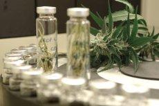 Medyczna marihuana to jak na razie trzy zarejestrowane leki, ale żaden z nich nie leczy raka.