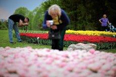 Wiosna przyjdzie 10 kwietnia? Tak wskazuje prognoza pogody na najbliższe dni