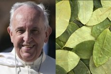 Papież Franciszek miał poprosić boliwijski rząd o liście koki do żucia