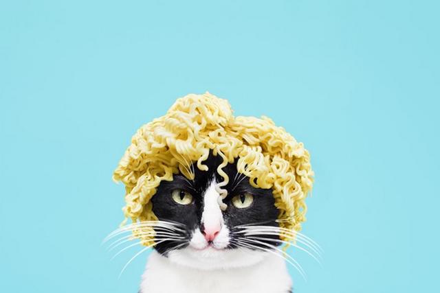 Cheeto - aktualnie najzabawniejszy kot internetu.