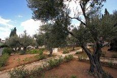 Jeden z Ogrodów Biblijnych w Izraelu