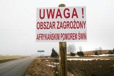 Rolnicy wciąż cierpią z powodu rozprzestrzenia się ASF.