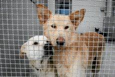 Koniec z jedzeniem psów na Tajwanie.