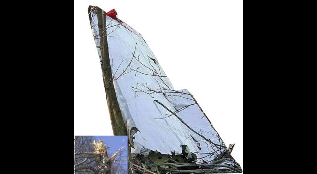 Urwana na brzozie końcówka skrzydła z lotką, o rozpiętości 5.5 m i długości całkowitej 6.5 m.