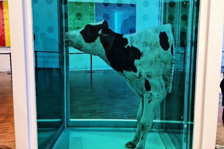 Damien Hirst to wybitny artysta, ale wybranie na lunch miejsca w towarzystwie tej  przepołowionej krowy było równie kontrowersyjne, co samo dzieło