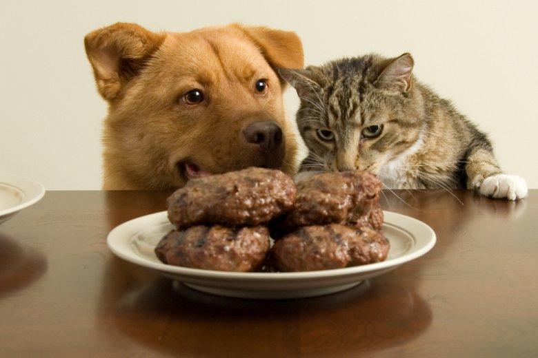 """Wielka afera z kotletami z psów i kotów to prowokacja: Dziennikarz """"Nie"""": Wszyscy się wkręcili"""
