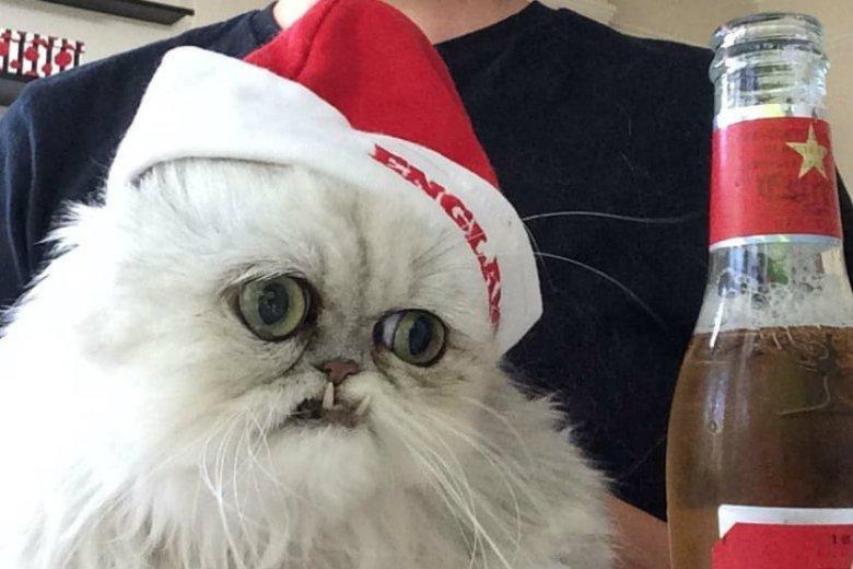 Kot Wilfred ma 161 tys. obserwujących na Instagramie.