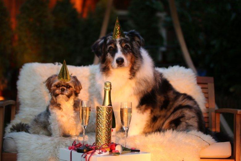 Sylwester dla ludzi to zwykle noc świetnej zabawy, zwierzaki nie zawsze są jednak zadowolone