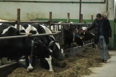 Premier Mateusz Morawiecki złożył wizytę u dostawców mleka w Wysokiem Mazowieckiem.