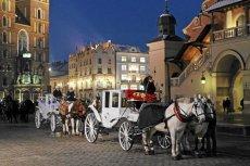 W Krakowie zasłabł koń ciągnący dorożkę.