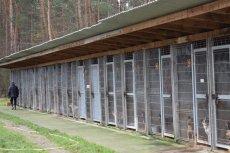 Wolontariusze ponad rok obserwowali schronisko w Sobolewie. Nie wierzą w zapewnienia urzędników.
