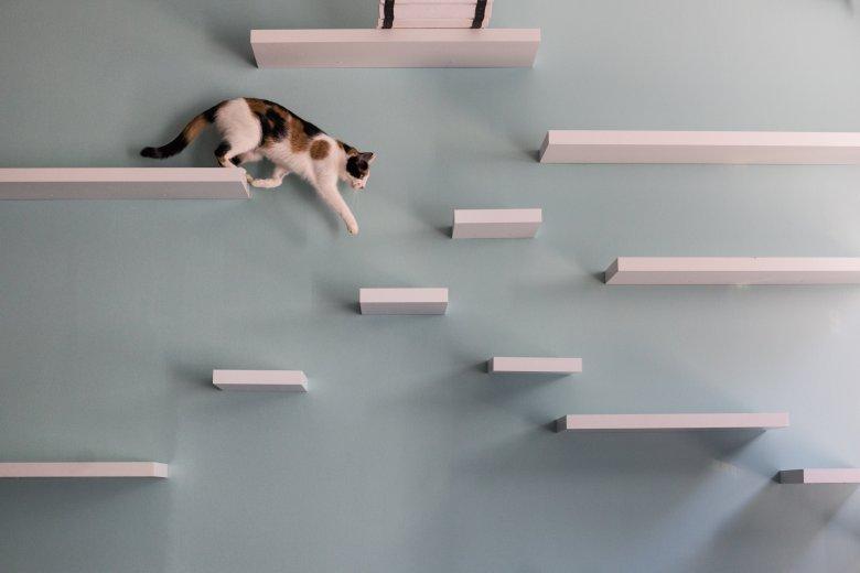 Koty były obserwowane w różnych sytuacjach, gdzie konieczne jest użycie jednej z łap