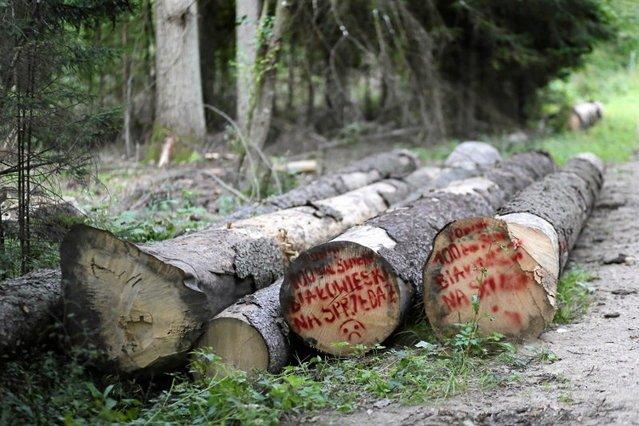 Żeby drwalom w Puszczy Białowieskiej czasem nikt nie patrzył na ręce. Sąd skazał ekologa i dziennikarza.