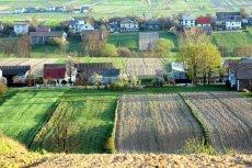 W wielu polskich wsiach nie chcą wielkich chlewni i hodowli świń.