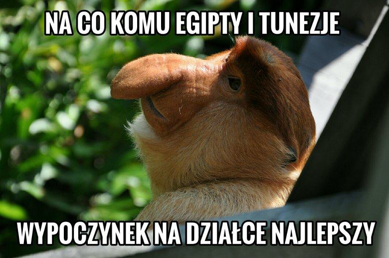 Nosacz A Sprawa Polska Dlaczego Małpy Stały Się Tłem Do Popularnych