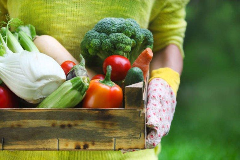 Uwaga weganie i wegetarianie. Rośliny wiedzą, kiedy je zjadamy