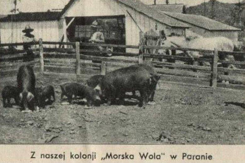 Morska Wola - osada polskich kolonistów w brazylijskiej Paranie.