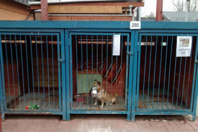 """Psy z """"Palucha"""" nie mogą narzekać na warunki."""