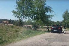 Rodzina wyszła z auta w trakcie safari. Cudem przeżyła