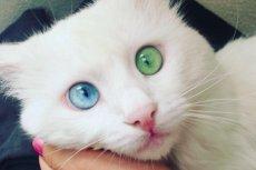 Aloş ma hipnotyzujące spojrzenie.