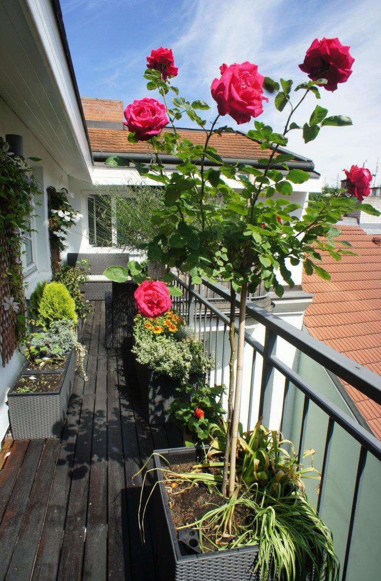 Delikatne kwiaty w donicach w razie niepogody wniesiesz bez problemu do mieszkania.
