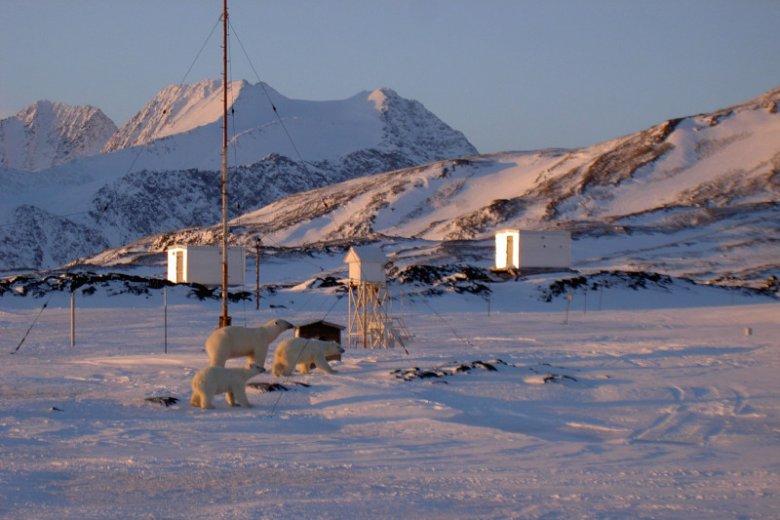 Niedźwiedzie polarne przychodzą z wizytą do Polskiej Stacji Polarnej na Spitsbergenie. Niedługo nie będzie to częsty widok.