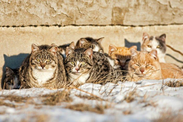 Coraz niższe temperatury za oknem to zwiększona umieralność bezpańskich kotów i psów