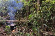 Wywar Ayahuaski w trakcie gotowania.