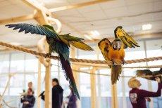 Papugarnie powstają w Polsce jak grzyby po deszczu. Mini zoo, w którym można karmić i głaskać papugi, ma jednak mroczną stronę.