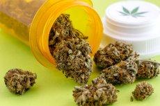 Pierwszy transport medycznej marihuany do polskich aptek wyprzedał się na pniu.