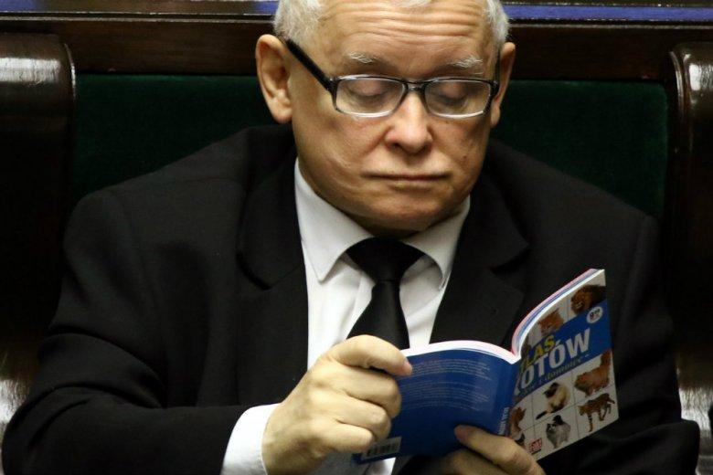 Kim jest kot Jarosława Kaczyńskiego, pyta na Facebooku mec. Jacek Dubois, pełnomocnik Geralda Birgfellnera.