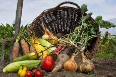 Żywność organiczna wcale nie jest zdrowsza
