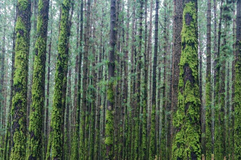 Podczas ulewy część drzew liściastych ustawia liście pod kątem, który sprawia, że woda cieknie po gałęziach aż do pnia i w dół, tak, żeby drzewo skorzystało jak najwięcej z ulewy, zabezpieczając się na suchsze dni.