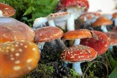 Sanepid oferuje grzybiarzom bezpłatne konsultacje