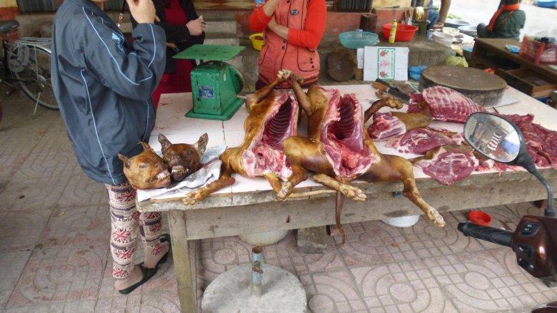 We Francji jedzą żaby, w Wietnamie - psy.