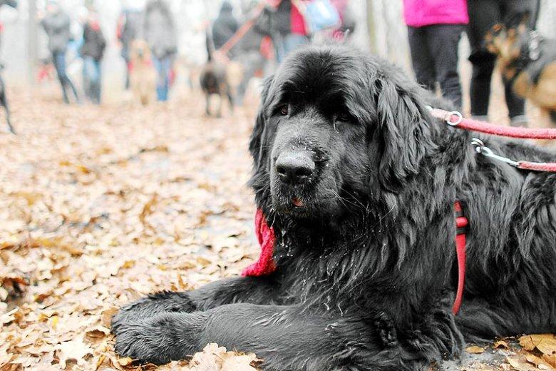Gdy psie cmentarze są rzadkością pogrzeb psa zazwyczaj organizuje się w ogrodzie lub parku. To nielegalnie. W przeciwieństwie do... utylizacji szczątków.