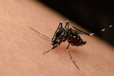 Supermalarię roznoszą komary.