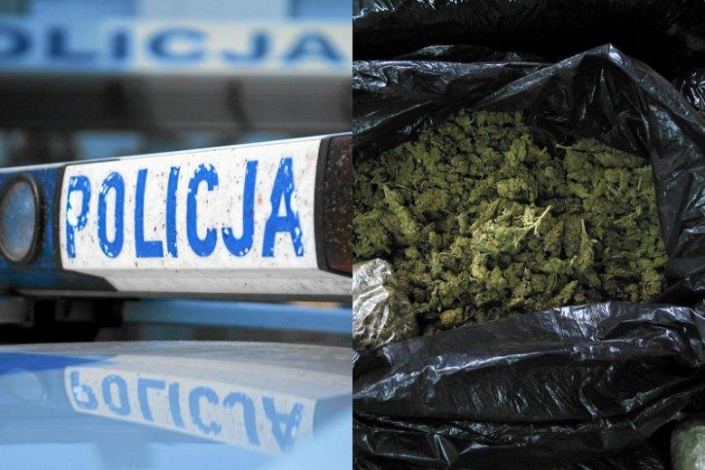 Według Wolnych Konopi najazd policji na placówkę BioInfoBanku mógł  być wynikiem zmowy z mafią.