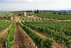Winnica w miejscowości Villa a Sesta we Włoszech. Zdjęcie poglądowe