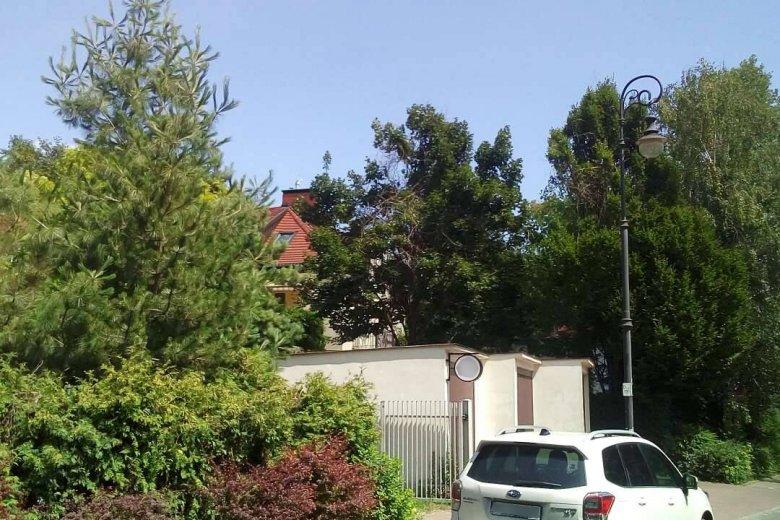 Zielona, spokojna okolica na Żoliborzu zakłócana jest przez głośną muzykę. Sąsiad (dom w głębi) puszczą ją, bo przeszkadza mu gwar z restauracji (pierwszy plan)